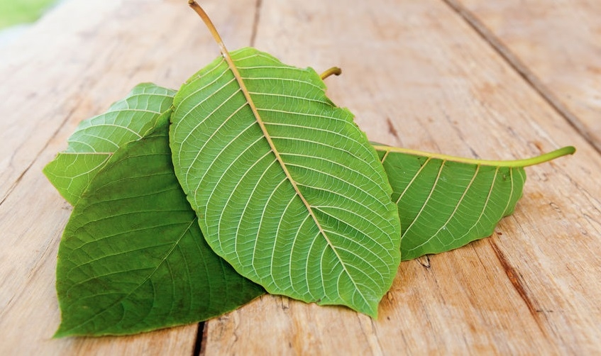 Kratom Benefits in Waynesville, NC